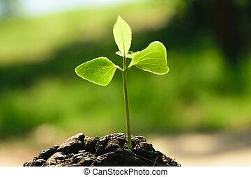 sostegno, crescente, forte, costruzione, albero, vita, tronco, future.., concetto, piantina, centro, ), nuovo, (focus