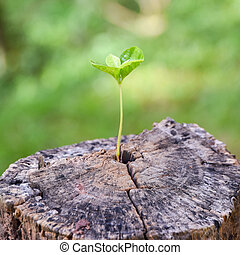 sostegno, crescente, forte, costruzione, tronco albero, ...