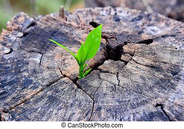 sostegno, crescente, forte, costruzione, tronco albero, concetto, piantina, life), centro, future., nuovo, (focus