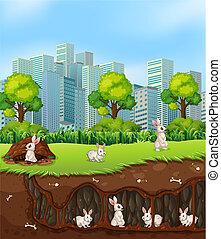 sotterraneo, coniglio, sopra