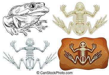 sotterraneo, rana, fossile
