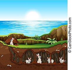 sotterraneo, vivente, coniglio