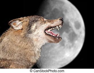 sotto, lupo, luna