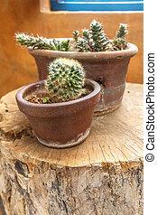souche, jardin, foyer sélectif, bois, petit, cactus