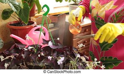 soucier, fleurs, femme, pots