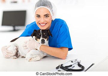soucier, vétérinaire, chien