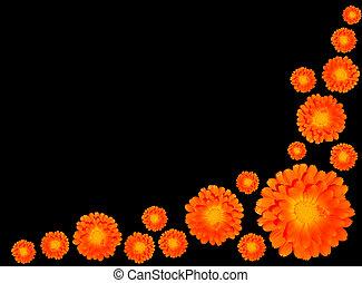 soucis, groupe, pot, -, orange, officinalis, calendula