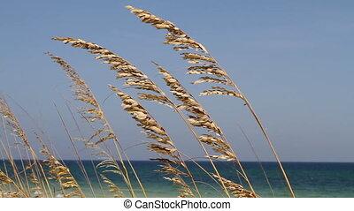 soufflé, vent, avoine mer