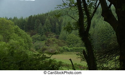 souffler, vent, forêt, arbres, montagne