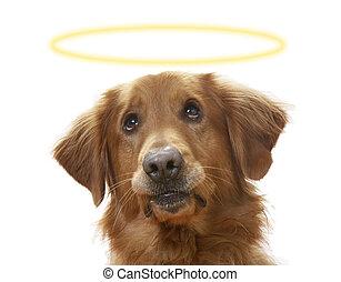 soulful, 犬