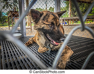 soupçonné, cage, chien, rabies, piégé
