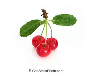 Sour cherry - Fresh sour cherry