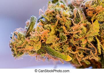 Recreational Marijuana, Strain Sour Diesel from River Rock
