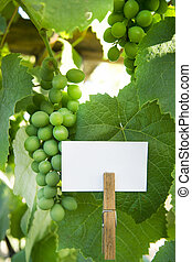 Sour grapes - Presentation of a bunch of sour grapes with...