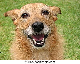 sourire, chien, heureux