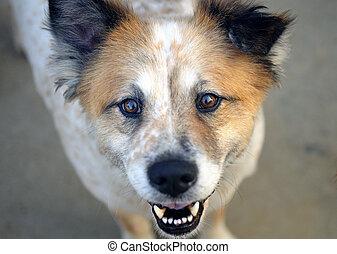 sourire, chien