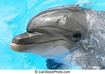 sourire, dauphin, une