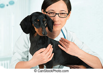 sourire, vétérinaire, teckel
