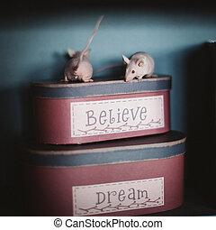 souris, chauve, blanc rouge, boîtes, laboratoire