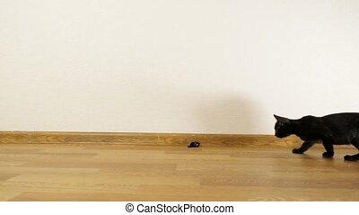 souris, jouer, chaton, jouet, ficelle, noir