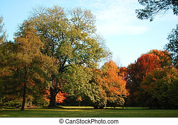 sous, automne, arbres, bleu ciel, parc vert