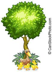 sous, canetons, arbre, elle, canard