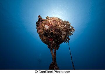 sous-marin, corail, bouée