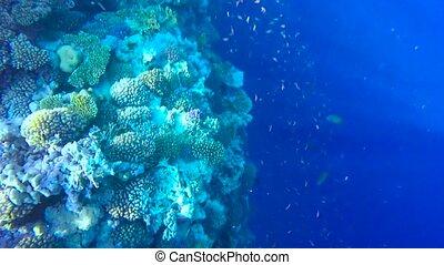 sous-marin, corail, vue