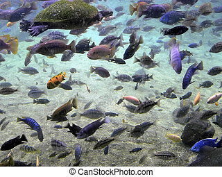 sous-marin, couleurs