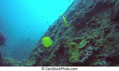 sous-marin, extrême, plongée, seascape., paradis, sport, ...