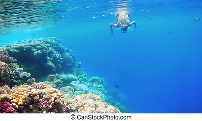 sous-marin, femme, plongeon, masque, plongée, snorkeling