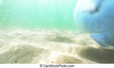 sous-marin, grand, noir, sea., flotter, méduse