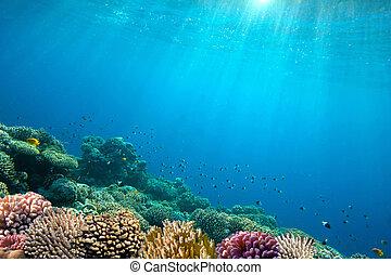 sous-marin, image, fond, océan