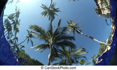 sous-marin, inhabituel, piscine, arbres., ciel, effet, eau, ...