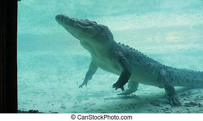 sous-marin, jambes, crocodile, biche