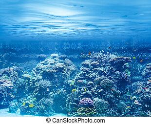 sous-marin, récif, corail, océan, exotique, mer, poissons, ou