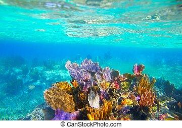 sous-marin, riviera, corail, maya, snorkel, récif, paradis