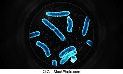 sous, -, microscope, bactérie, bleu