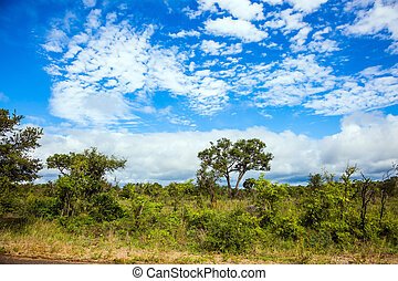 The famous Kruger Park - South Africa. The famous Kruger ...