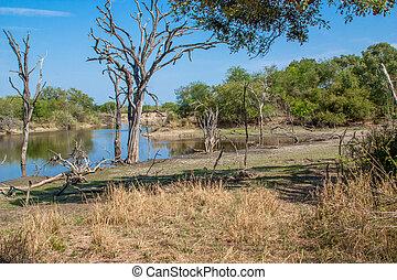 south african landscape and river in UAR, Kruger's park