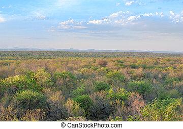 south african landscape in UAR, Kruger's park