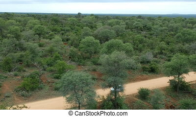 South African savanna with sandy road and horizon. Aerial view.