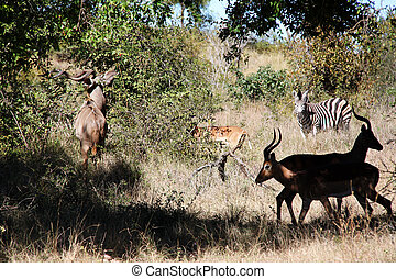 A number of wild animals together in south africa
