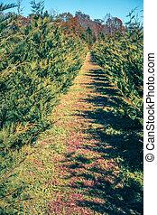 south carolina christmas tree farm on a sunny day