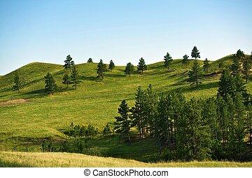 Black Hills Landscape - South Dakota Black Hills Landscape -...