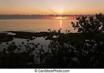 South Florida Sunrise in Mangrove Trees, near Biscayne Bay