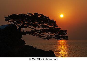 South Korea beautiful hajodae