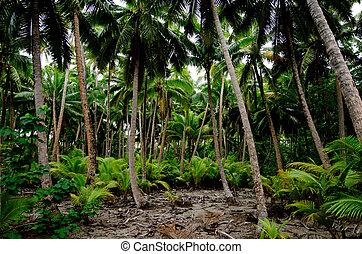 South Pacific Rain Forest Jungle
