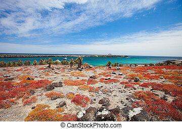 South plaza island - Beautiful landscape of Galapagos South...