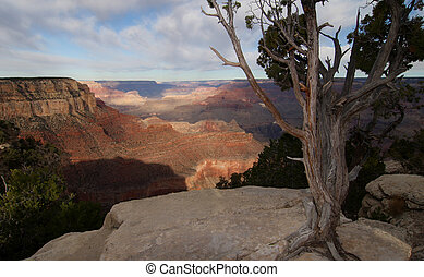 A view of Grand Canyon from South Rim with trees in the fore ground. Grand Canyon National Park, Arizona, USA.